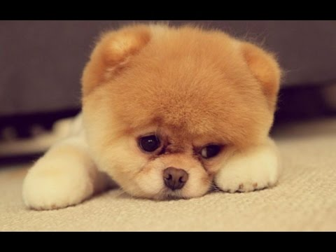 BEST FUNNY DOGS VINE COMPILATION (Week-3) – OCTOBER 2016