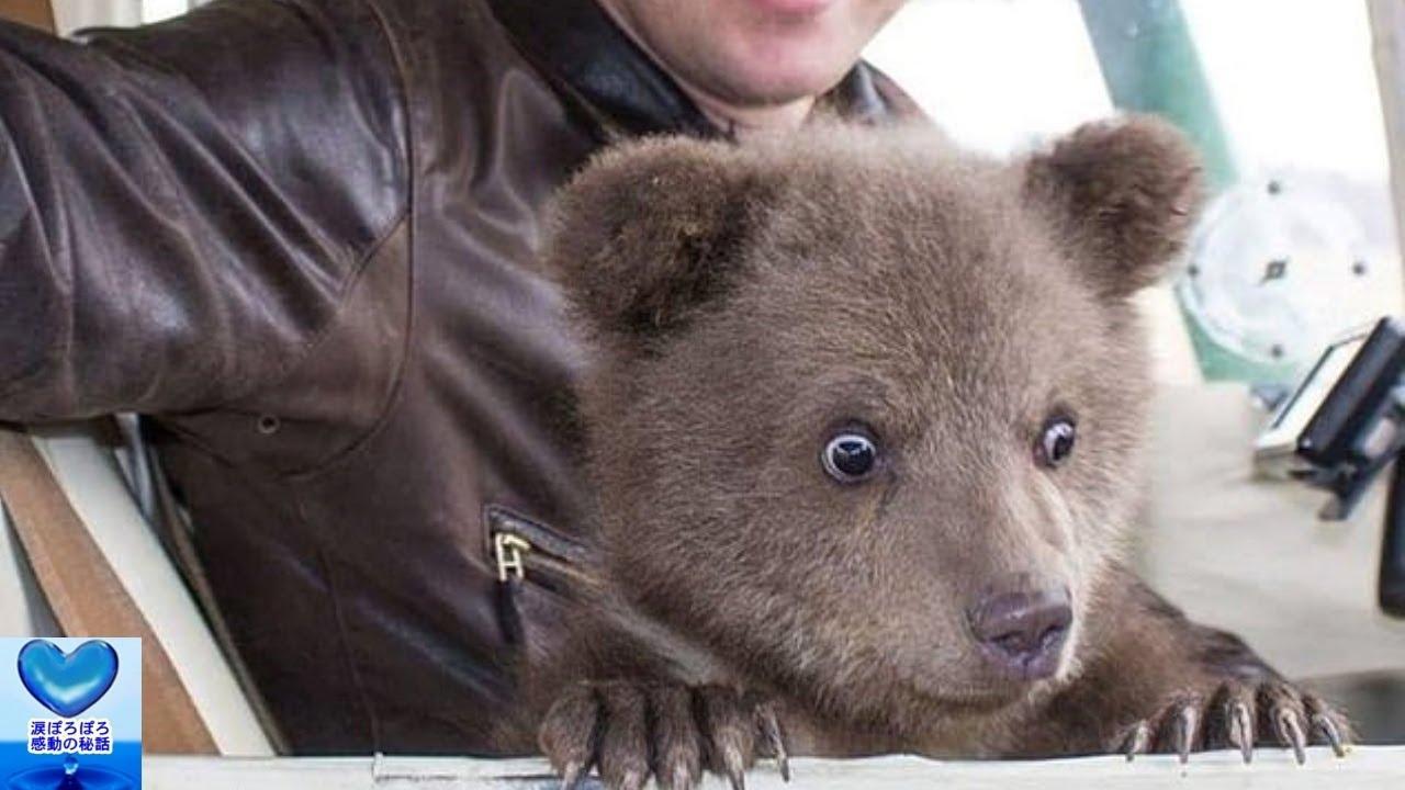 パイロットによって2度助けられたクマ。一度は自然保護区に放すことになるがそこには予想外の事実が!【感動】