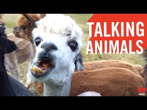 If Celebrities Were Animals