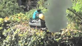 Angry Birds Go Plush Episode 4: Stunt Part 1