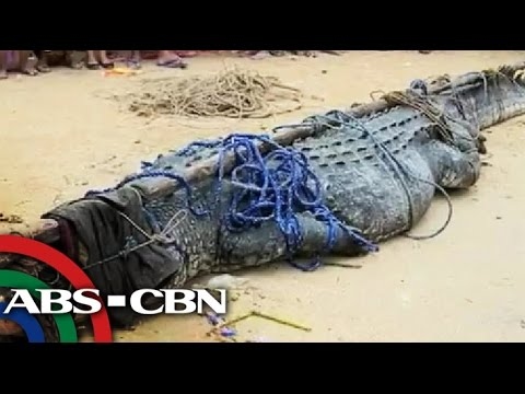 Giant croc 'Julio' blamed for fisherman's death