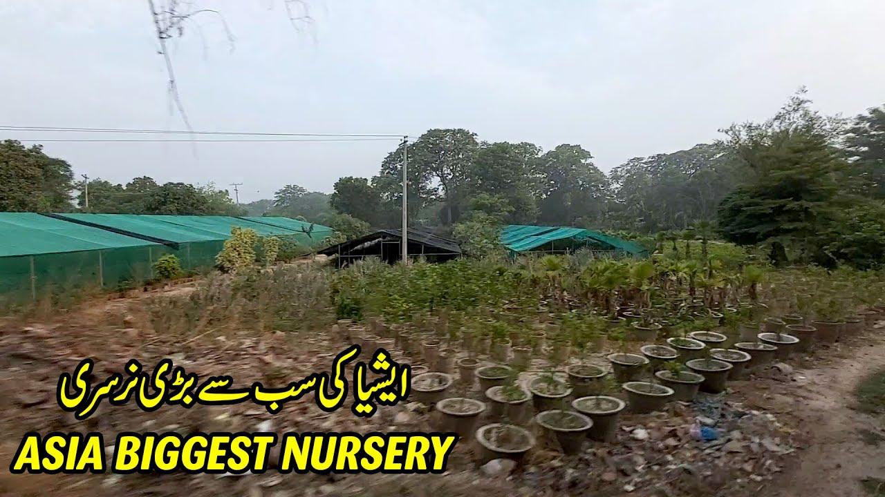 ASIA BIGGEST NURSERY IN PAKISTAN | THE PATTOKI NURSERIES | 34DN PAK BUSINESS EXPRESS