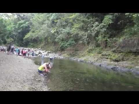 El Yunque National Forest stream break in Puerto Rico