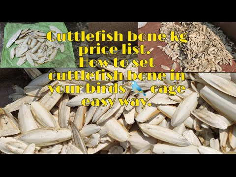 Cuttlefish Bone Price List. How To Set Cuttlefish Bone In Birds 🐦 Cage Easy Way.