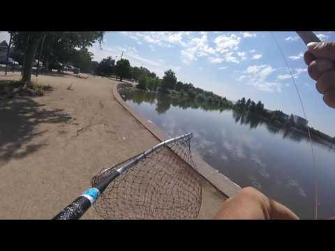 You Tube Virginia Lake Carp Episode 4