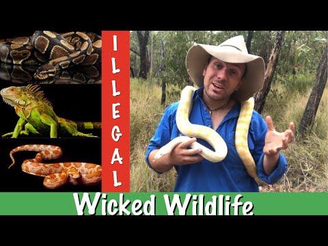 3 Reasons Exotic Reptiles Are Illegal In Australia