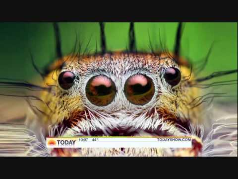 Thomas Shahan on the Today Show to discuss jumping spiders and macrophotography