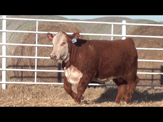 Express Ranches Lot 238