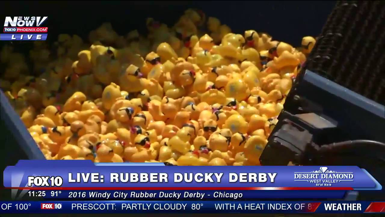 rubber ducky derby chicago collecting the duckies fnn youtube