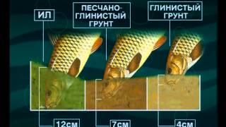 Диалоги о рыбалке  141  Ловля сазана на Волге.