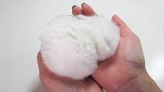 Fluffy Bunny Furball, Sleeping in my Hand!