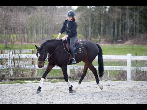 A Wet Spring Day| Riding Raws/Free Lunge
