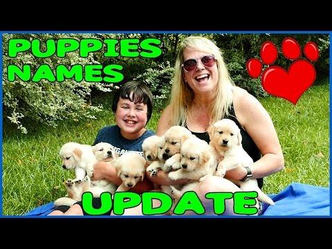 PUPPIES NAMES UPDATE!  Golden Retriever Pups with Cheryl and Brayden