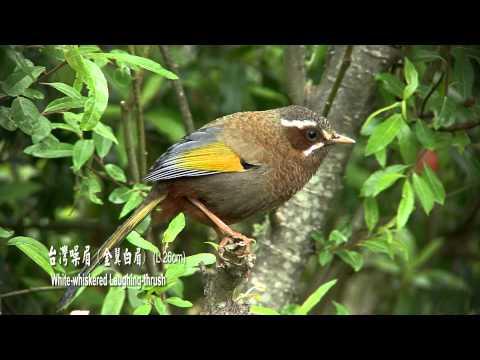 大自然音樂:悅耳的鳥叫聲一秒讓人彷彿置身大自然 壓力瞬間紓解 @ 清單控推薦 實用資訊總整理 :: 痞客邦