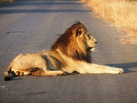 Kruger National Park South Africa - Big Five