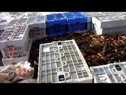 Lobster Fishing To Some Bon Jovi