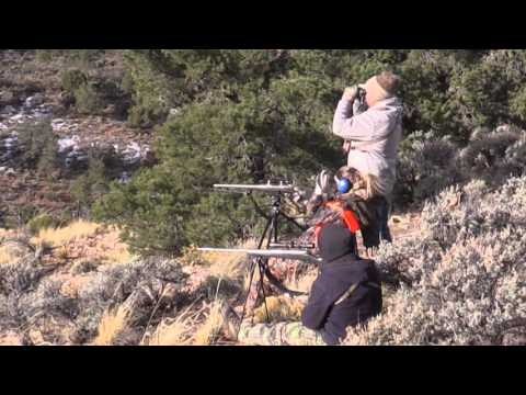 Arizona Kaibab Deer Hunt