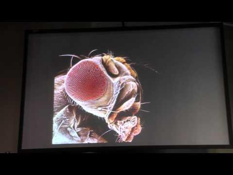 Organismal seminar Dr. Claude Desplan - Part 1/2