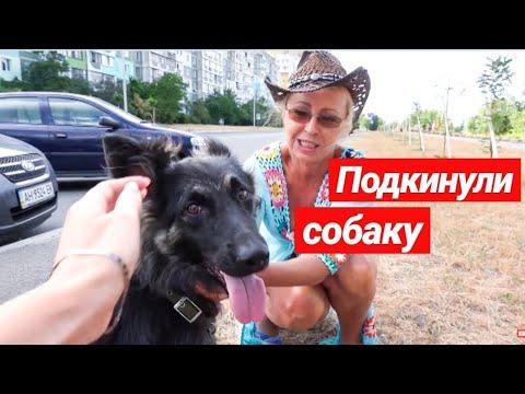 ПРАНК НАД МАМОЙ / ПОДКИНУЛА СОБАКУ