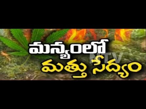 NTV Special Ground Report on Ganja Cultivation In Visakha || NTV
