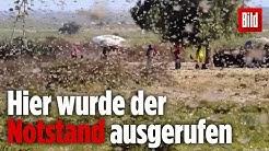 Schlimmste Heuschrecken-Plage seit Jahrzehnten