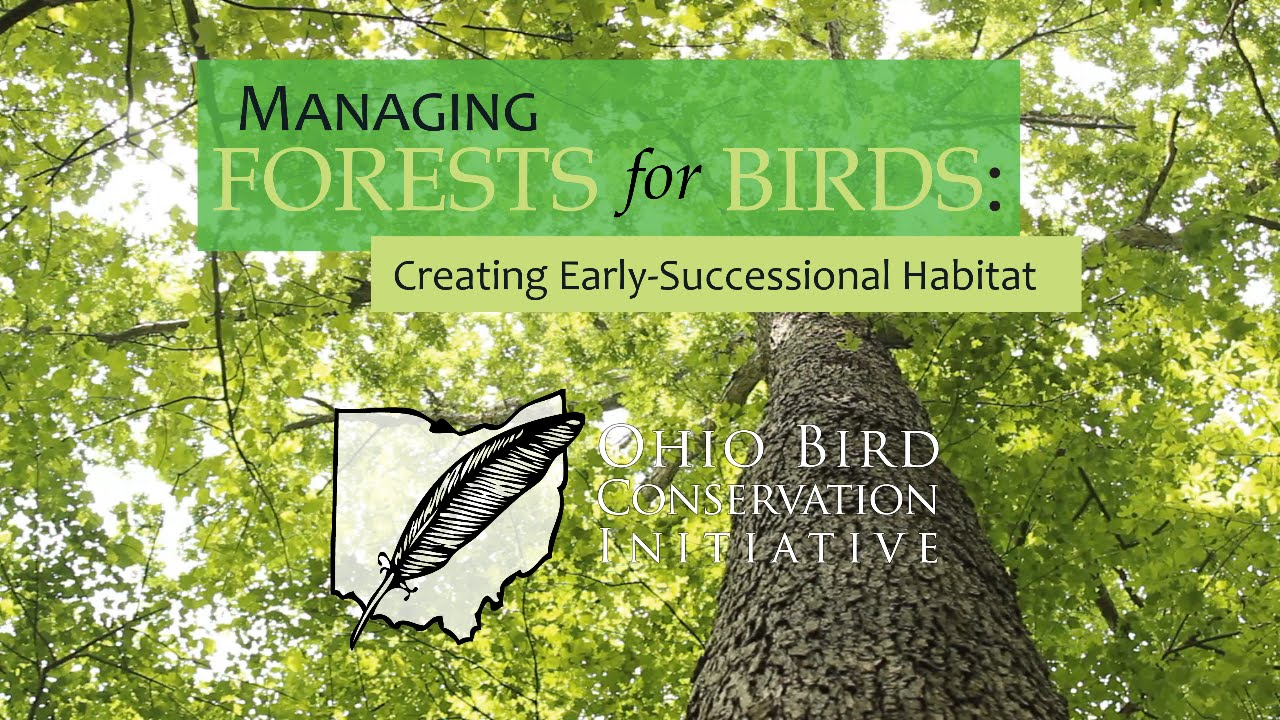 Managing Forests For Birds Part 2 Creating Early Successional Habitat