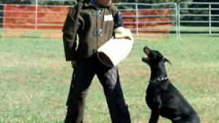 Dpca Dobermann  Schutzhund Trial 2008