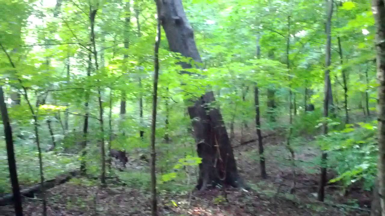 Tree Falling In The Woods Youtube