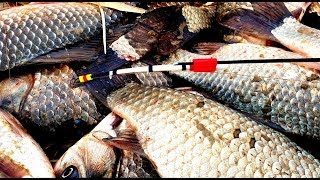 рыбалка на мормышку 2019-2020 ДВЕ РЫБИНЫ НА ОДИН КРЮЧОК ЖОР КАРАСЯ НА МОРМЫШКУ