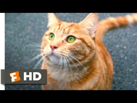 A Street Cat Named Bob (2016) - He Loves You Scene (4/10) | Movieclips