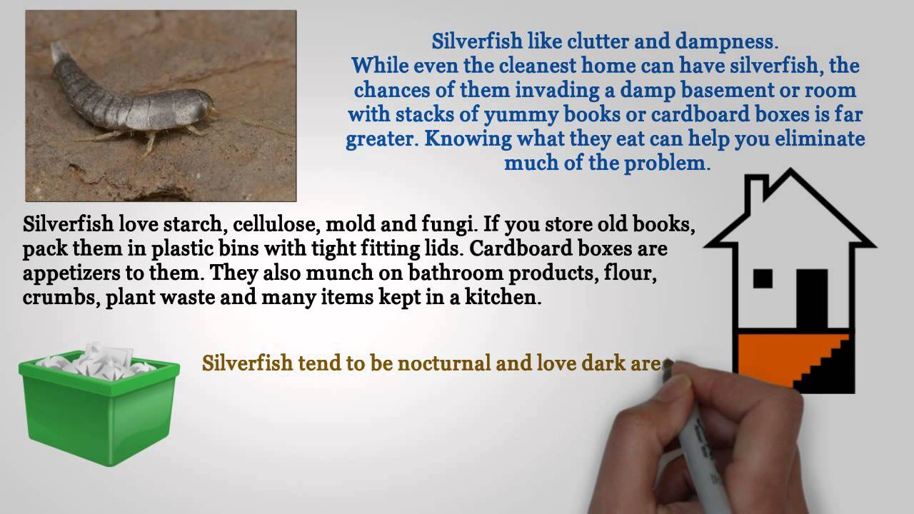 Tips for Getting Rid of Silverfish - YouTube