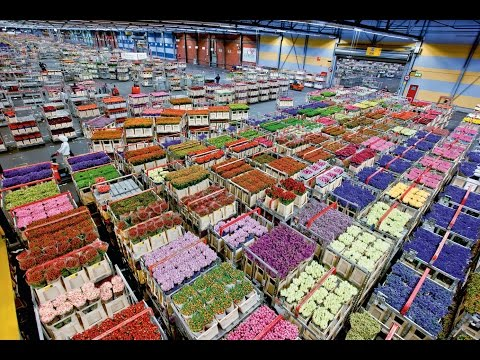 Миллиардный оптовый рынок цветов. | Бизнес с Китаем!