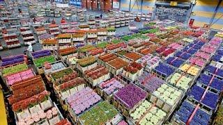 Миллиардный оптовый рынок цветов. | Бизнес с Китаем!(, 2015-04-28T14:44:09.000Z)