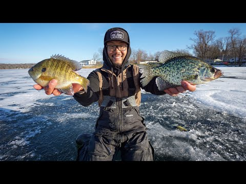 Early Ice Fishing For BIG Panfish! (CATCH CLEAN COOK)