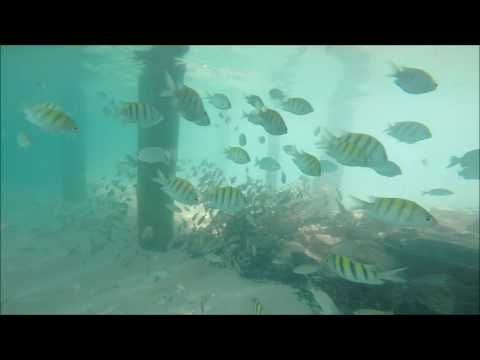 """""""Passively"""" Snorkelling in Mexico's Mayan Riviera"""