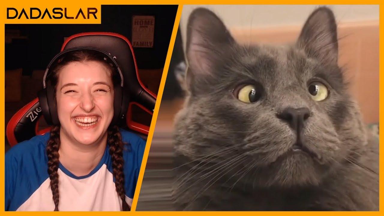 Pqueen - 2020'nin En İyi Kedi Videolarını İzliyor !