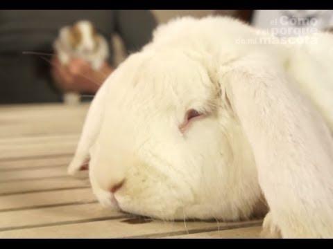 Conejo gordo como adelgazar