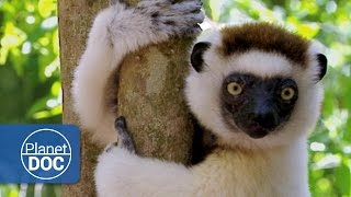 Madagascar. Los Hijos de Lemuria | Documental Completo (Original)