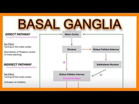 Basal Ganglia (Direct Vs. Indirect Pathways)