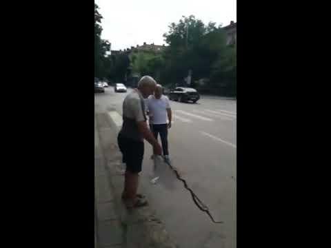 Змия вся паника на централна улица в Плевен