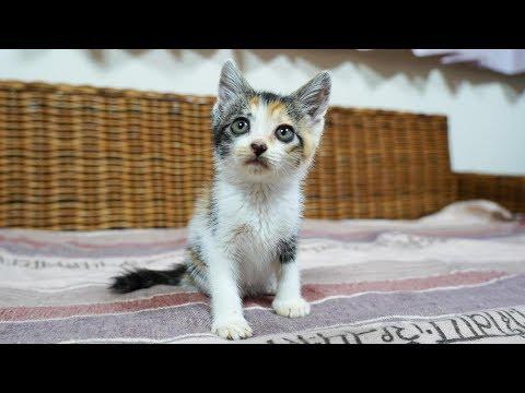 三毛子猫ですがなにか?子猫保護から巣立ちまでの成長記録