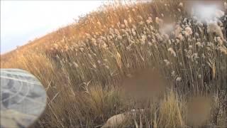 Охота с Лабрадором на фазана в Краснодарском крае