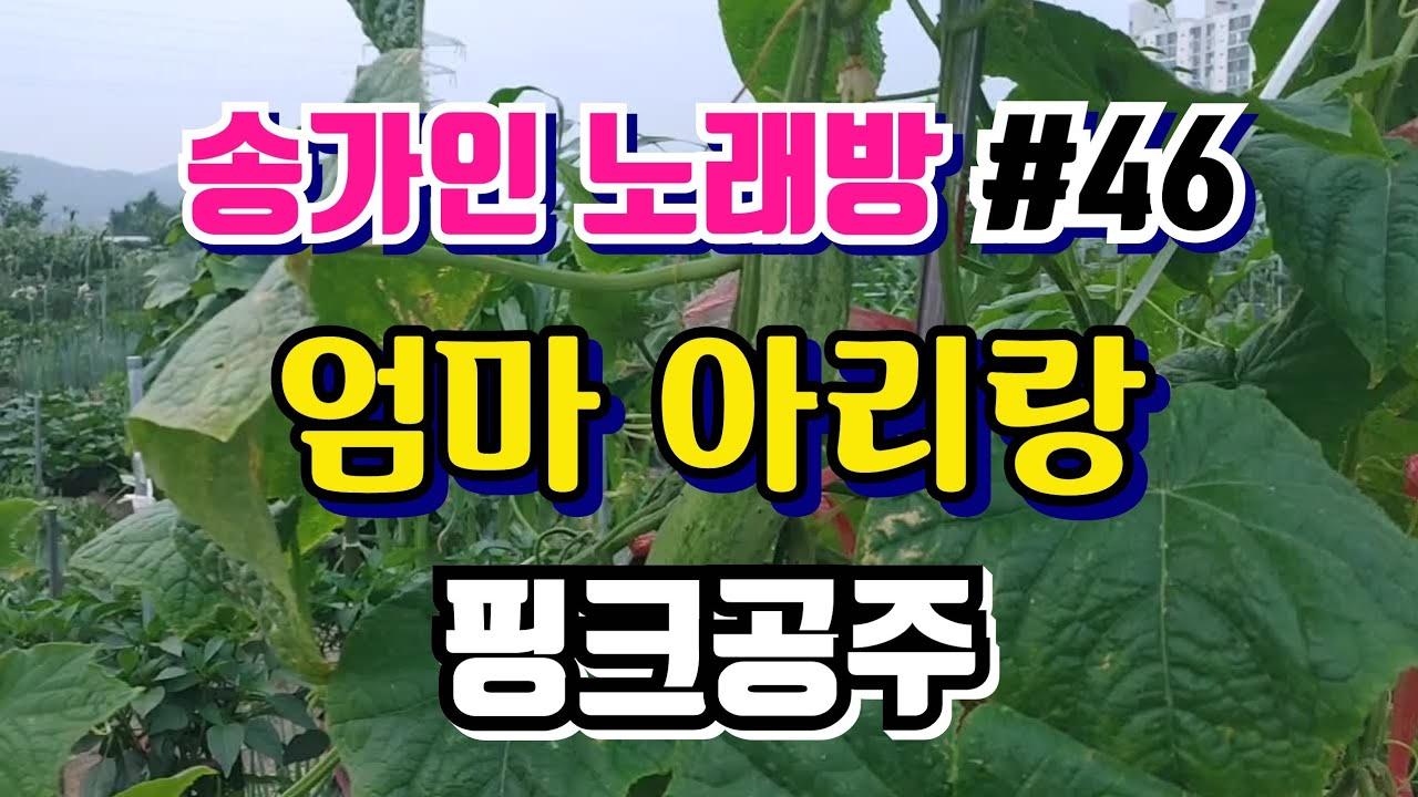( #송가인 노래방 #46 ) 엄마 아리랑 핑크공주 ★명품 송가인 찐팬의 커버곡★