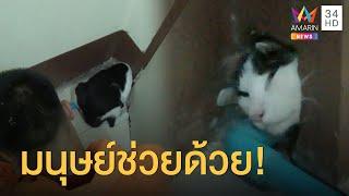 น่าเอ็นดู! แมวอยากออกไปเที่ยวมุดรูท่อ หัวติด!   ข่าวเที่ยงอมรินทร์   24 ก.ค.63