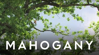 Garden City Movement - My Only Love | Mahogany Music Club