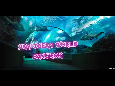 Siam Ocean World (incl glass bottomed boat ride with sharks!) - Bangkok - Thailand.
