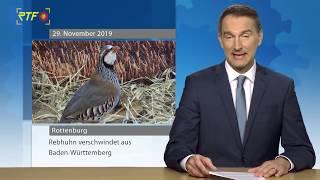 Rebhuhn im Baden-Württemberg vom Aussterben bedroht