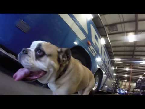 A Day in the Life - Arrow Stage Lines Omaha - Tank the Bulldog