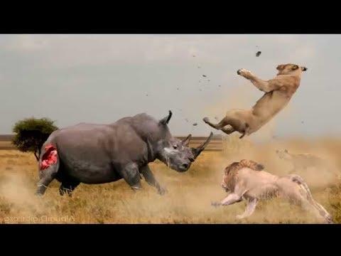 وحيد القرن دبابة
