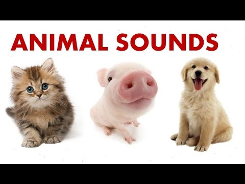 Animal Sounds For Children To Learn || BEST